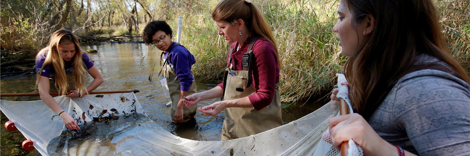 Students in a creek with a net