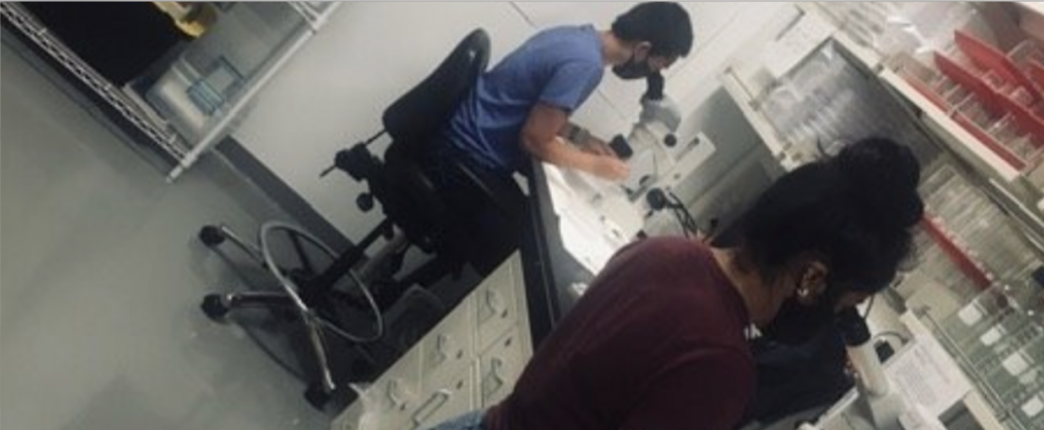 Students looking in lab microscopes